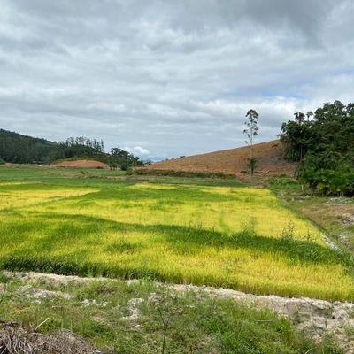 Terreno Rural Rio Branco Guaramirim