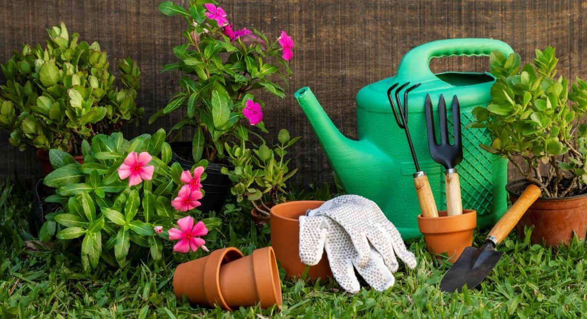 6 dicas para ter um belo jardim em casa
