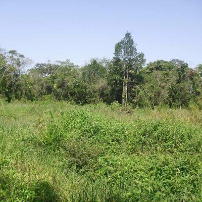 Área rural com 37 Alqueires Mineiros, Zona Rural, Piraí - RJ