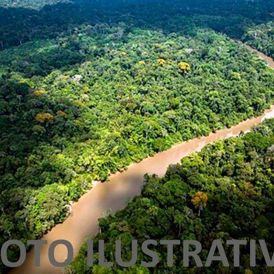 Área Rural para Venda - Gleba de mata primária para Compensação Ambiental - Angra dos Reis, RJ